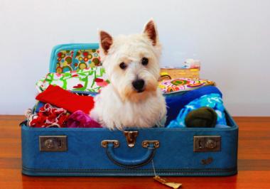 O que levar na mala de férias do meu pet?